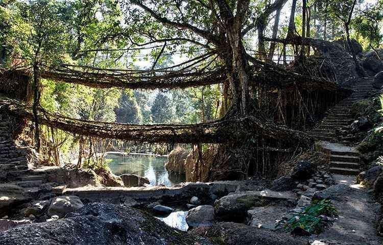 Ponte de raízes de figueira, na Índia - Reprodução/Internet