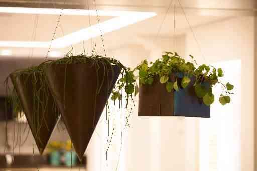 A arquiteta e decoradora Érica Salguero levou o jardim para o teto do seu living - Levi Mendes Jr/Divulgação