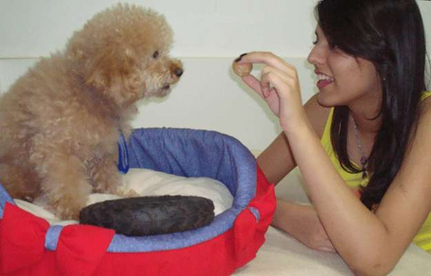 Usando jogos e brinquedos, a estudante Priscila Freitas evita que seu cachorro destrua meias - Mariana Fagundes/CorreioWeb
