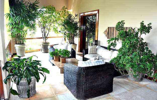 Uso de plantas na decoração exige cuidados com iluminação e tamanho da espécie  - Eduardo Almeida/RA Studio