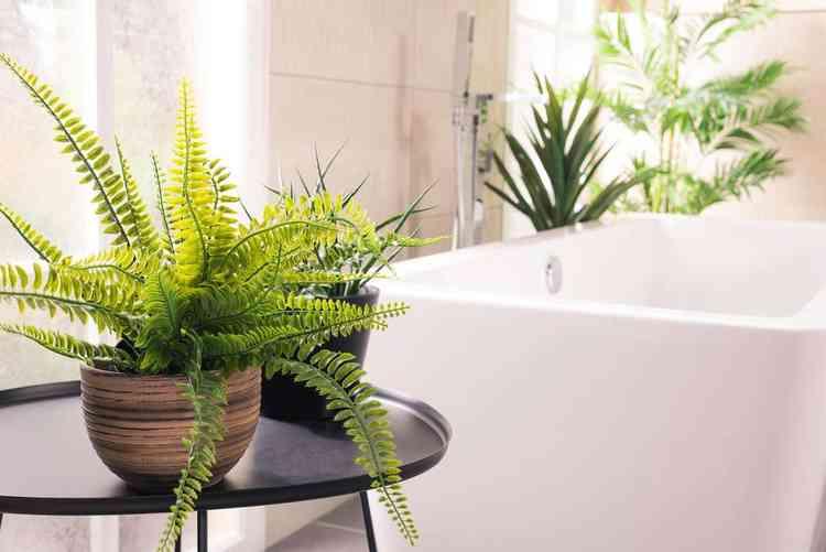 Jardim de inverno no banheiro - Freepik