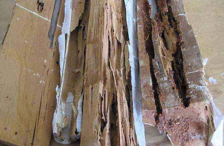 Além de destruir mobiliário, insetos acabam com pisos e portas de madeira - Beto Novaes/EM/D.A Press.