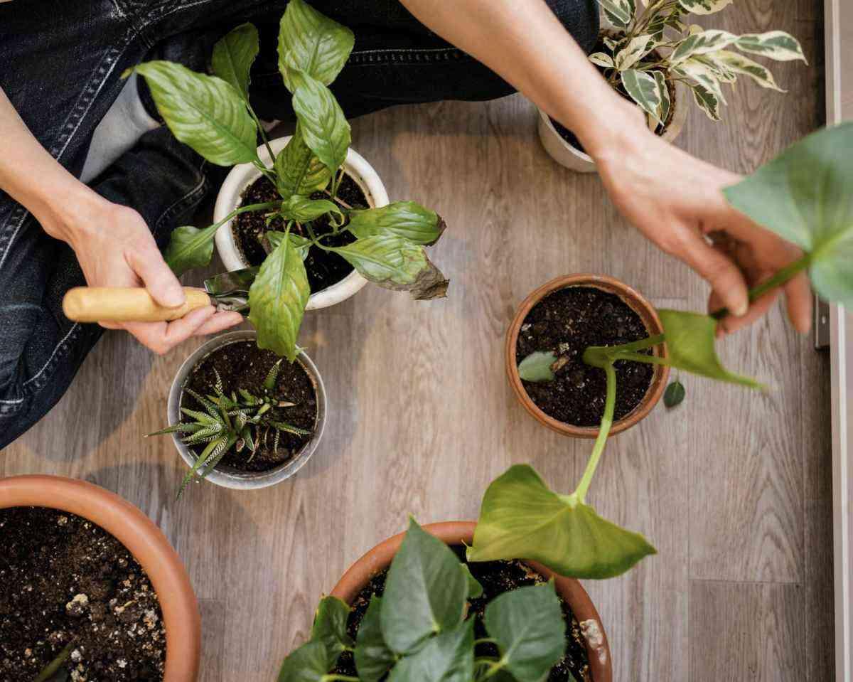 Aprenda a retirar pragas das plantas - Freepik
