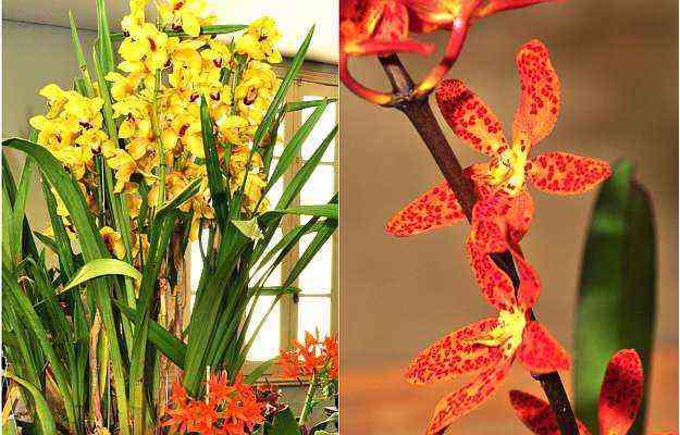 Delicadeza das flores impressiona até mesmo os cultivadores mais experientes - Eduardo Almeida/RA Studio