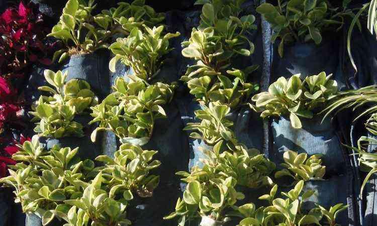 Instalado em abril, jardim se mantém sustentável sem precisar de água e energia - Divulgação