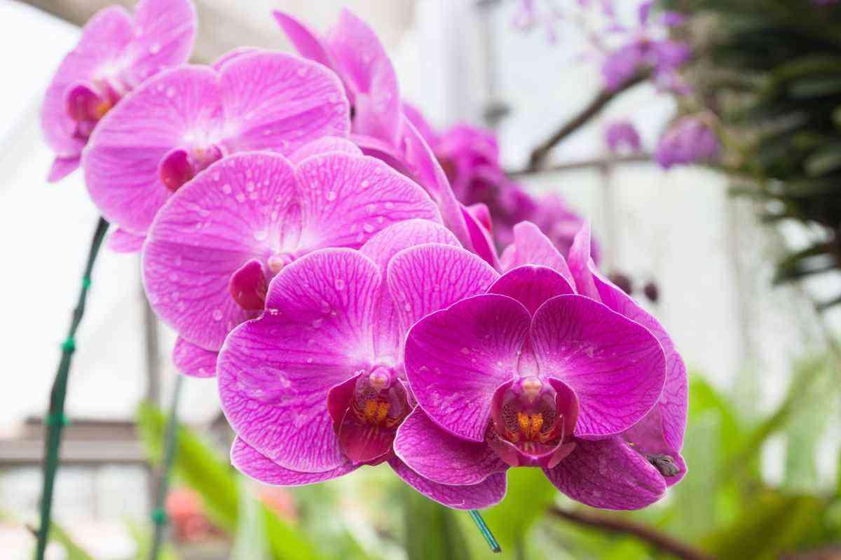 Como cuidar de orquídeas - Freepik