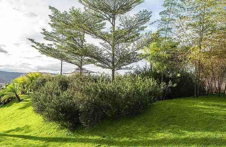 Parasoleil (Terminalia mantaly) é uma árvore que perde suas folhas no outono  - Daniel Mansur/Divulgação