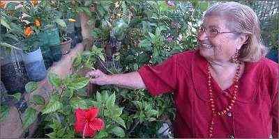 A dona-de-casa Terezinha Reis usa a sabedoria de família para cuidar do jardim que montou no quintal - Beto Magalhães/Em/D.A Press