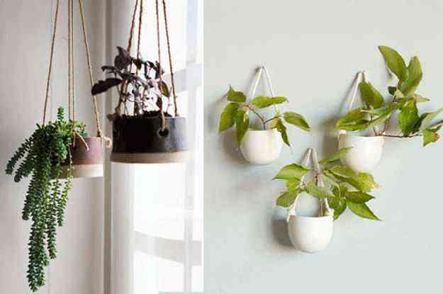 Cordas normais foram escolhidas para manter as plantas suspensas - Homelife/Reprodução Internet
