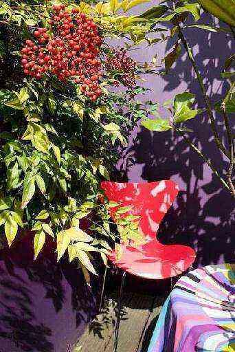 Vegetação exuberante traz a residência para os trópicos - Arquivo pessoal