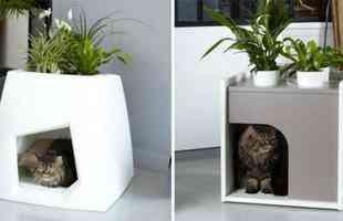 Vaso de planta serve como abrigo para os bichinhos