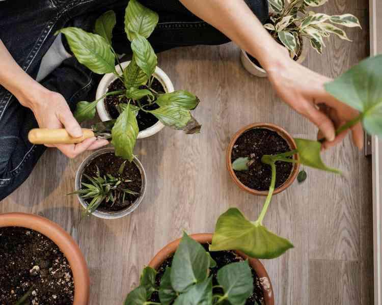 Plantas de sombra - Freepik