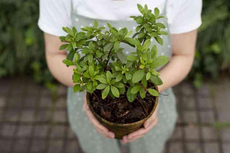 Aprenda como adubar suas plantas - Freepik
