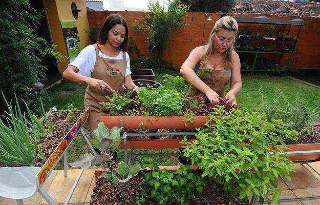 Márcia Fantini e Solange Parreira se especializaram em estruturas para hortas reduzidas - Euler Junior/EM/D.A Press