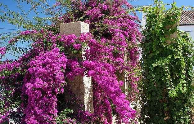 Reprodução/Internet/www.plantasonya.com.br