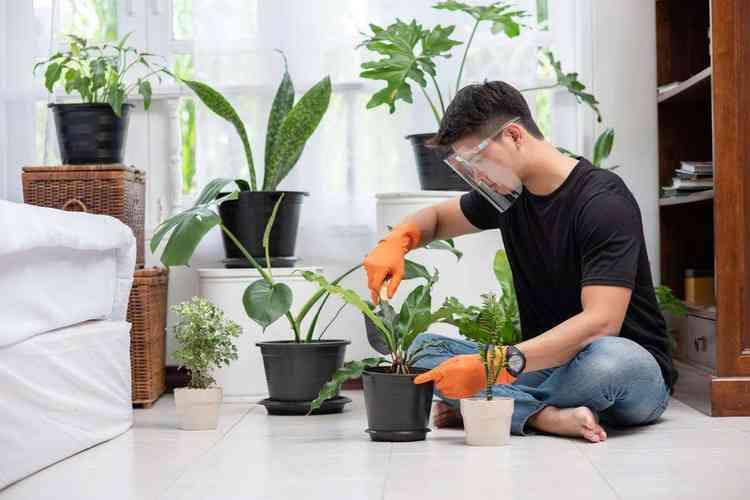 Aprenda como cultivar flores em apartamento - Freepik