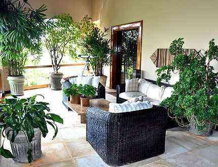 As plantas dentro de casa podem ser uma saída para amenizar o clima - Eduardo Almeida/RA Studio