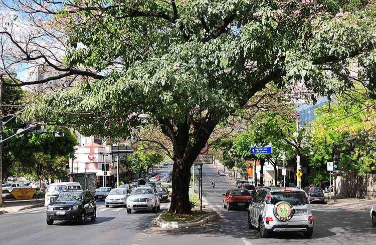 Avenida do Contorno é uma das principais vias que cortam o Bairro Funcionários, facilitando o deslocamento dos moradores - Alexandre Guzanshe/EM/D.A Press - 6/10/12