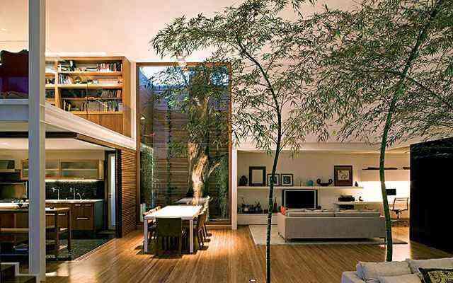 Além do fator estético, ter uma árvore dentro de casa é possuir um isolante térmico natural  - Reprodução/Internet