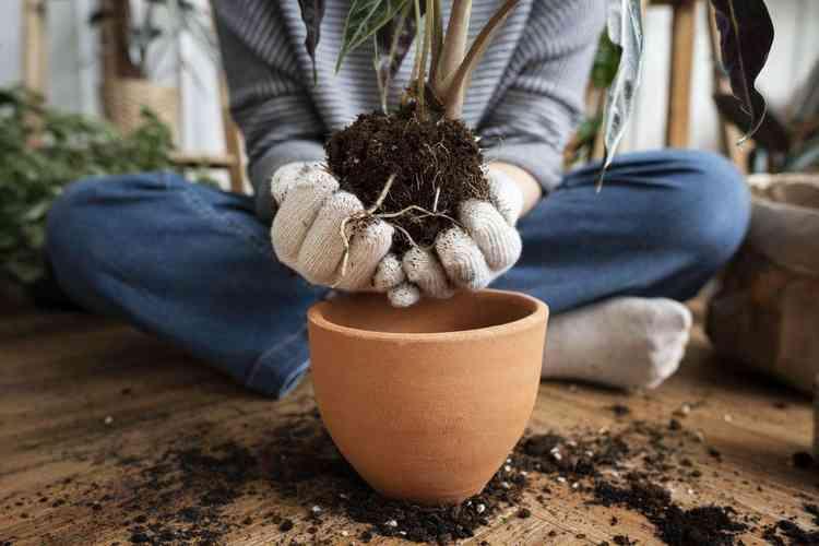 Plantas nativas do Brasil - Freepik