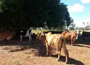Fazenda em Jardim Abc, Centro, Cidade Ocidental, GO valor de R$ 1.200.000,00 no Lugar Certo