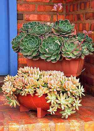 É possível ter plantas sempre verdes em casas, mesmo se não tiver tempo ou jeito para lidar com elas - Eduardo de Almeida/RA Studio